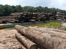 Desmatamento na Amazônia cresceu 29% em um ano (Foto: Wilson Dias/Agência Brasil)